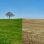 Agency-vs-Client-side_grass is greener