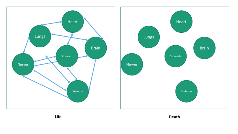 Living systems graphic 1