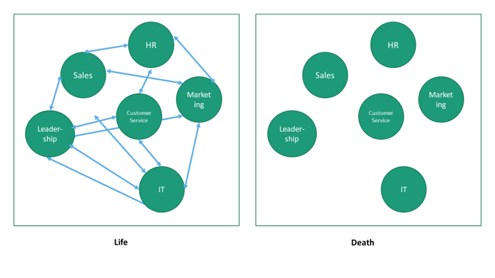 Living systems graphic 2